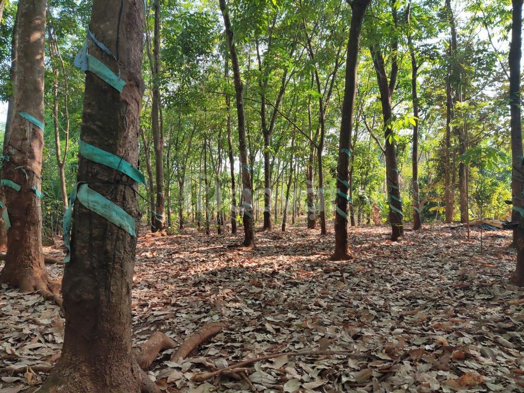 Bán nhà và đất Bình Long, Bình Phước giá rẻ