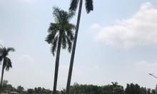 Dự án: KDC Sài Gòn Star City