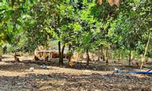 Cần nhượng lại 1005m2 đất vườn 3,2 tỷ ở đường Đê Bà Tỵ,có sổ hồng