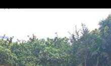 Bán mảnh đất 60m2 tại Thụy Phương, Bắc Từ Liêm
