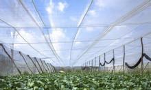 Lưới chắn côn trùng Israel, lưới chắn côn trùng 50 mesh, lưới