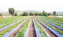 Cách sử dụng màng phủ nông nghiệp