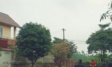 Bán biệt thự đẹp Khu 3 Vân Phú Thành phố Việt Trì