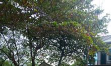 Bán nhà đẹp khu 15 Thị trấn Hùng Sơn - Huyện Lâm Thao - PHú Thọ 241m2