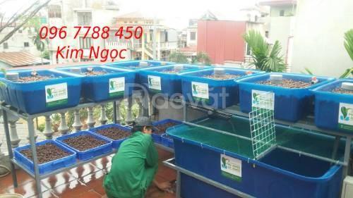 Thùng nhựa nuôi cá cảnh 2000 lít giá rẻ