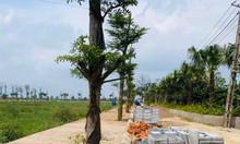 Bán đất nền dự án Green Park Hưng Hà