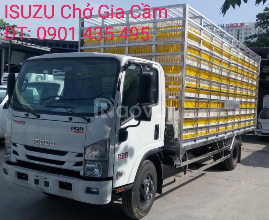 Isuzu chở gia cầm 238 Lồng, giao xe ngay, KM máy lạnh