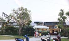 Phát Đạt Bầu Cả - trung tâm TP Quảng Ngãi - Quỹ đất vàng cuối cùng