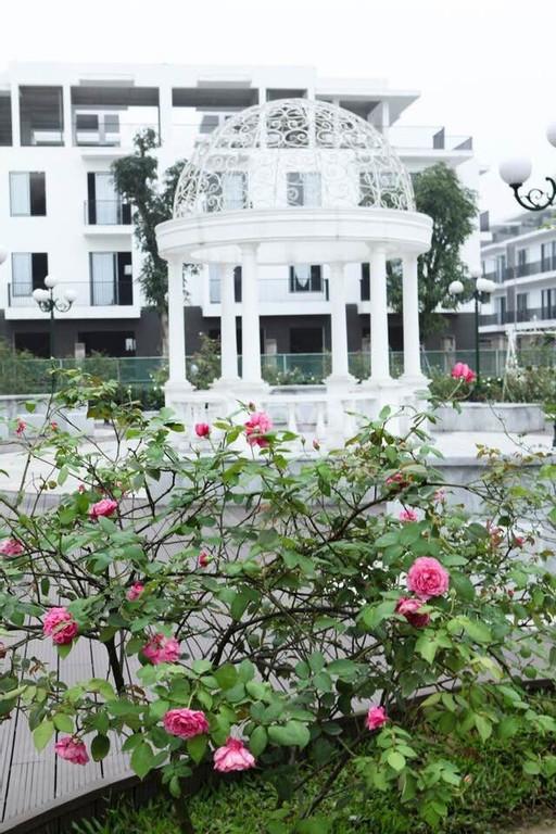 Chính chủ The Eden Rose cần bán căn liền kề R12- Hướng ĐN- Đã có sổ đỏ