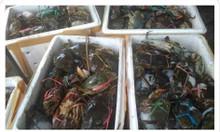 Nguồn cung cấp hải sản