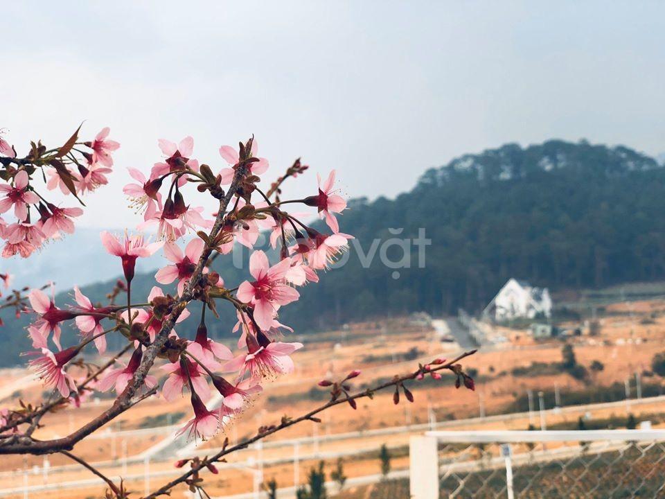 Đất nền biệt thự Langbiang Town cơ hội cho khách đầu tư