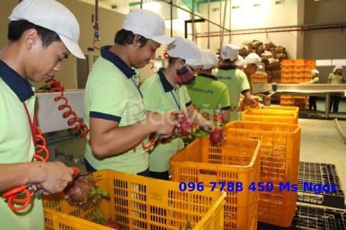 Rổ nhựa các loại đựng hàng giá công, may mặc, trái cây