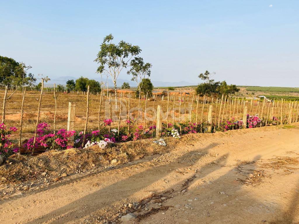Bán 1ha đất nông nghiệp Hồng Thái, sổ riêng chỉ 600 triệu