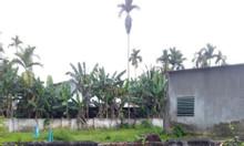 Bán đất xã Hành Thuận, diện tích 250, 9m2 giá 6xxtr