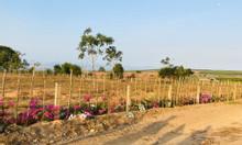 Bán 3095m đất Hồng Thái sổ hồng chính chủ