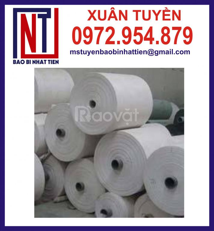 Cuộn PP dệt giá rẻ, vải PP dệt dạng cuộn (ảnh 5)