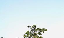 Đất nền 100m2 Trần Văn Giàu, Quận Bình Tân - liền kề Aeon Bình Tân