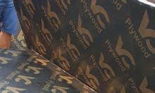 Cốp pha phủ phim giá rẻ tại Hòa Lạc