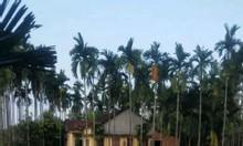 Bán lô đất hành đức diện tích lớn giá rẻ cho khách muốn làm nhà vườn