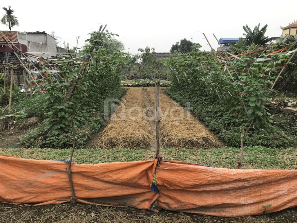 Bán gấp lô đất 99m2 xã Bắc Sơn, An Dương chỉ 600tr