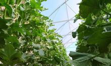 Lô đất trồng cây Bắc Bình