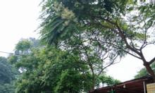 Bán ô đất đẹp khu 5 xã Phù Ninh - Phù Ninh Phú Thọ.