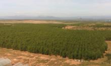 Bán 2275m đất hồng thái sổ riêng