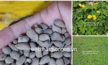 Các hạt giống ,  cây lạc dại 2020