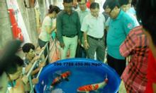 Bồn nhựa tròn 500 lít nuôi cá koi giá rẻ