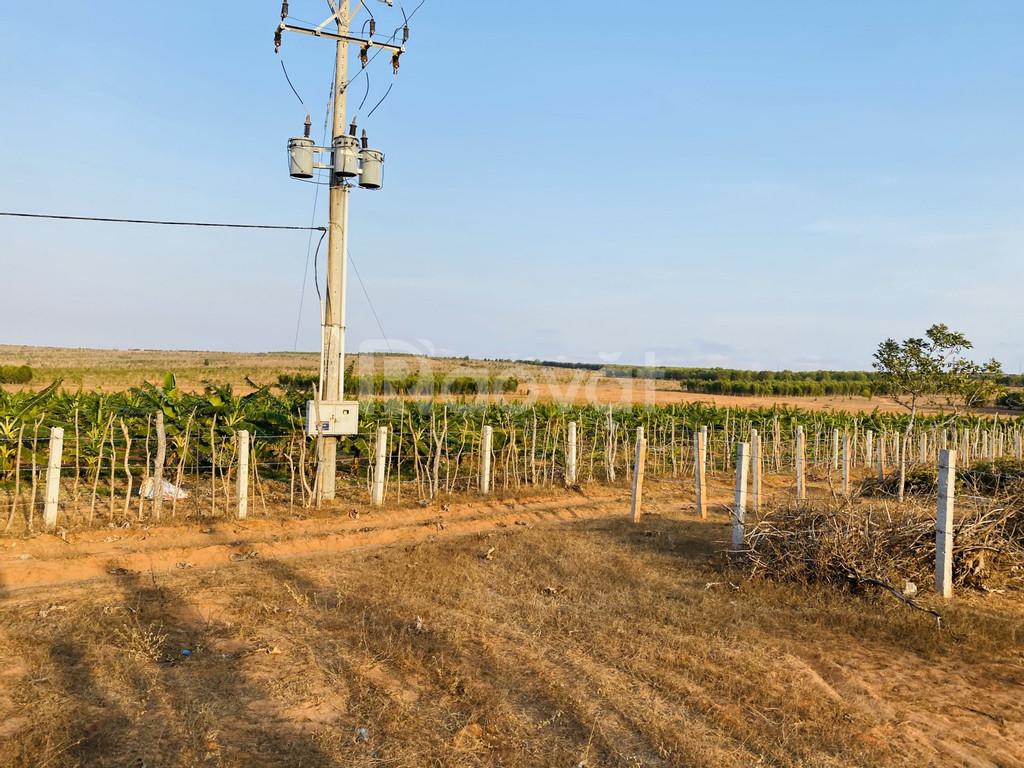 Cần bán lô đất trồng cây giá rẻ 65 ngàn/m2, bao sổ sang tên