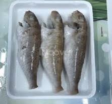 Cá lượng rìu – Biển Quỳnh Food