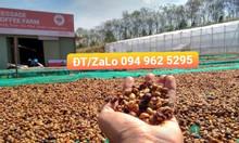 Bán buôn, bán lẻ cafe hạt Rô và hạt A giá tốt