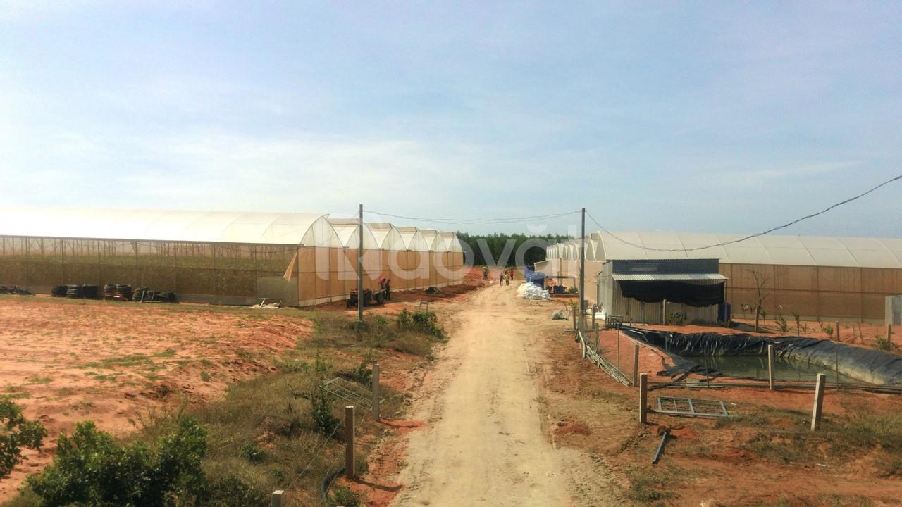 Bán đất nông nghiệp đón đầu cao tốc Phan Thiết chỉ 261tr/lô