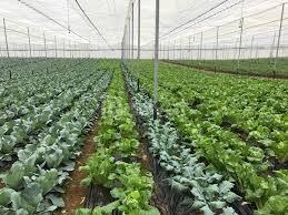Màng nhà kính nông nghiệp,giá màng nhà kính hà nội