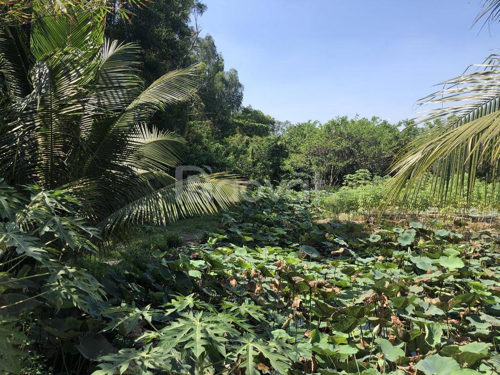 Bán đất Thảo Điền Quận 2 diện tích 730m2