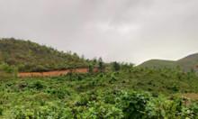 Cần tiền đầu tư kinh doanh cần ra đất đồi 10000ha,169tr/ha