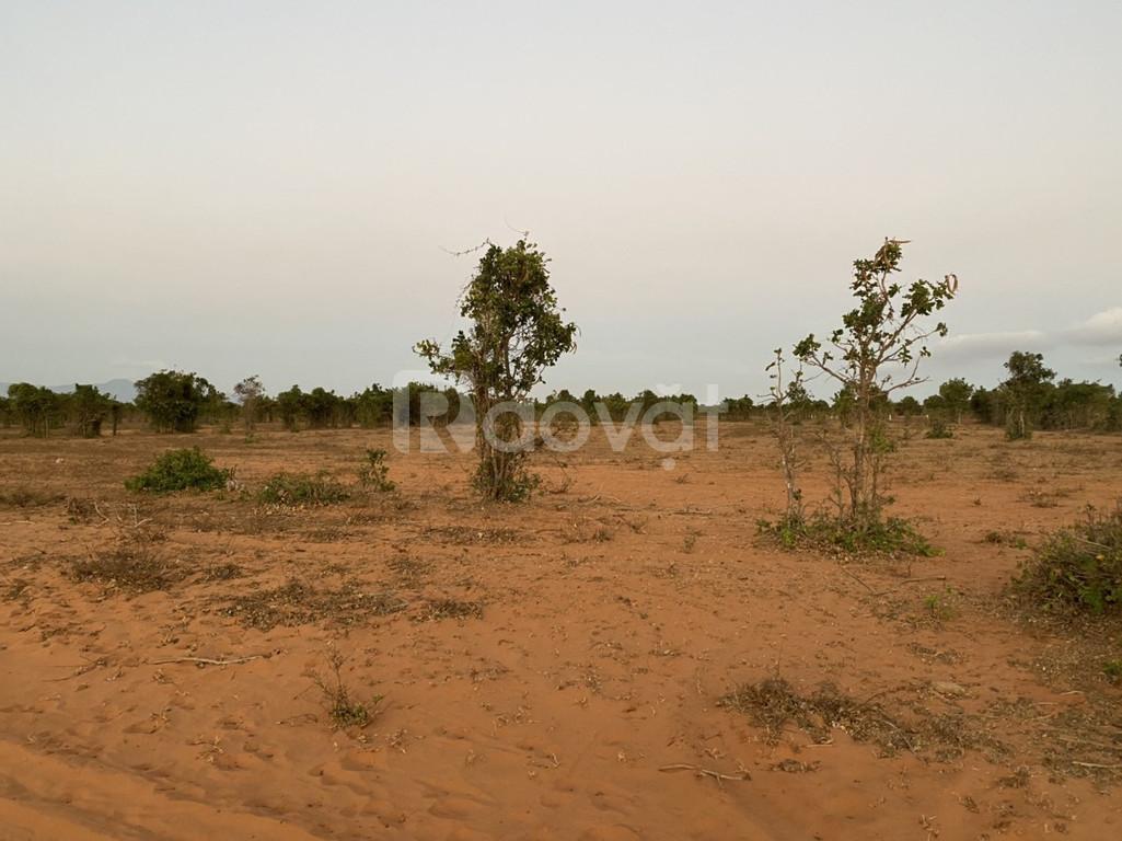 Bán 9283m đất trồng cây Bắc Bình sang sổ ngay chỉ 65k/m