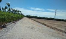 Đất công ty giá rẻ ở Bình Phước 1000m2 549tr SHR