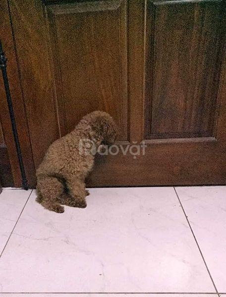 Khúc gỗ gặm dành cho chó