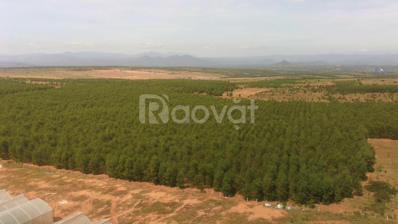 Bán 4333m đất trồng cây Bắc Bình chỉ 303,310k sang sổ ngay