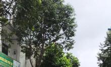 Cần vốn bán lô đất 80m2 Tỉnh Lộ 10, Bình Tân giá rẻ