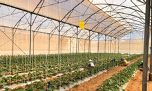 Với 490 triệu sở hữu 7000m2 đất vườn Bình Thuận rẻ, sổ cầm tay