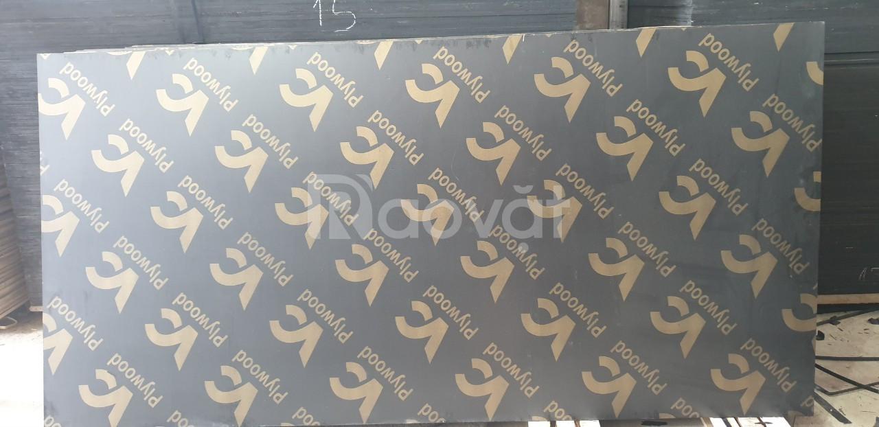 Cốp pha phủ phim giá rẻ 250k tại Hòa Bình