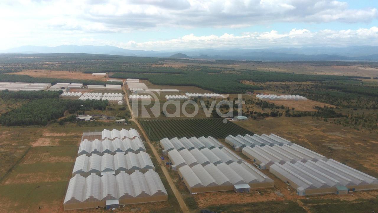 Đất trồng cây rẻ, SHR, gần KDL nghỉ dưỡng, đường ôtô vào đất