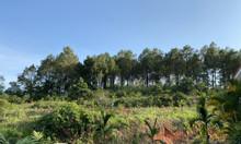 Bán 3ha đất trang trại nằm sát mặt hồ Rộc Cả Hoành Bồ có rừng thông