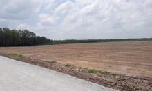 Làm ăn thua lỗ bán lô đất 1000m²/550tr có SHR, sang tên trong ngày