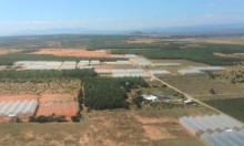 Đất nông trang trồng thanh long Bình Thuận