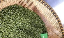 Cung cấp đậu xanh thực phẩm, đậu xanh làm giá