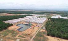 Bán đất vườn Bình Thuận rẻ chỉ 600triệu/10.000m2, SHR, tặng vàng