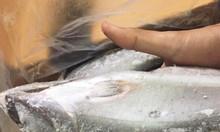 Tìm nhà phân phối Cá Ngừ Thu Hàn Quốc